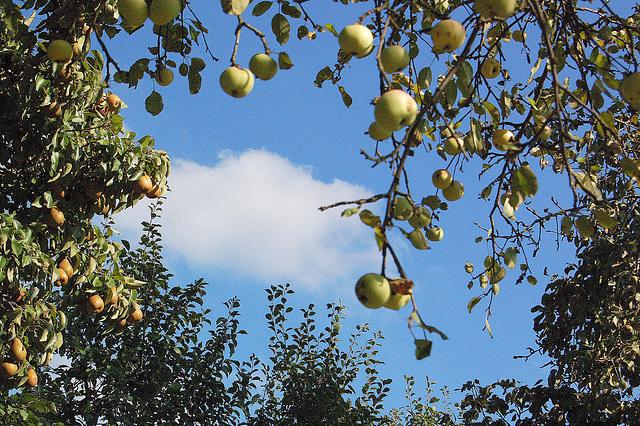 pomoj, nuboj, ĉielo (Äpfel,. Wolken, Himmel)