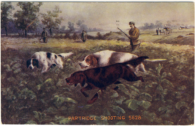 Partridge Shooting 5628