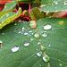 Wassertropfen als Vergrößerungsglas. Drops of water as a magnifying glass. ©UdoSm