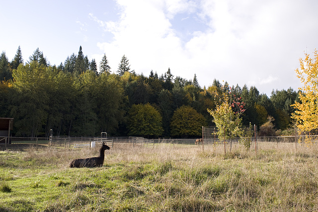 Ranger Dusty enjoys a sunny October afternoon in his pasture
