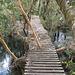 Spazierweg im Urwald bei El Pangue (Puyuhuapi, Chile)