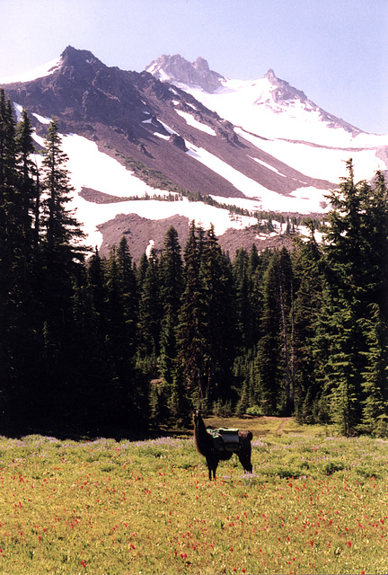 Ranger Dusty and Mount Jefferson