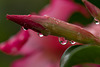 Il pleut, il pleut bergère …………..