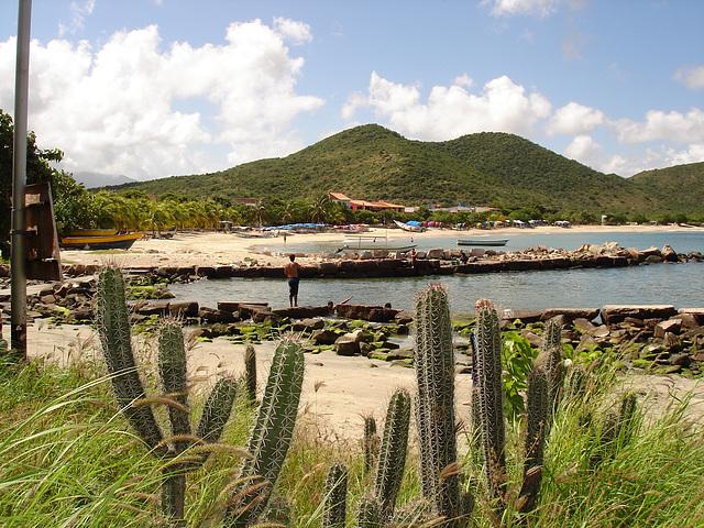 Cactus et plage / Cactus and beach.