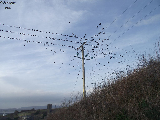 There were lots of birds and when they all flew together it was with a flourish