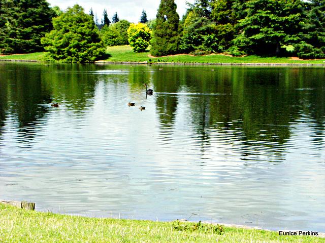 Tokoroa's Lake Moana-nui