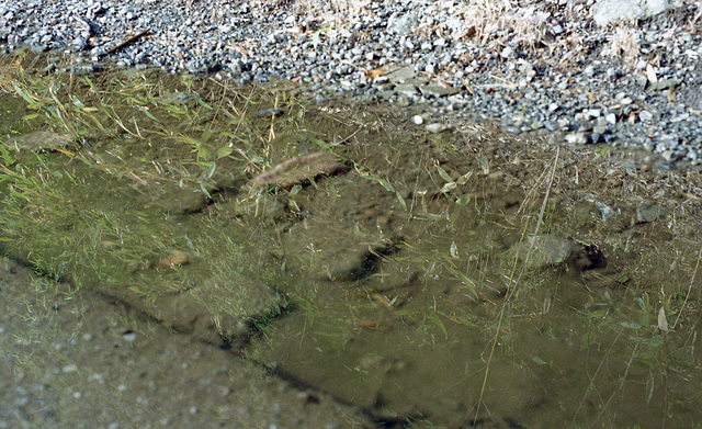 Reflection on the puddle