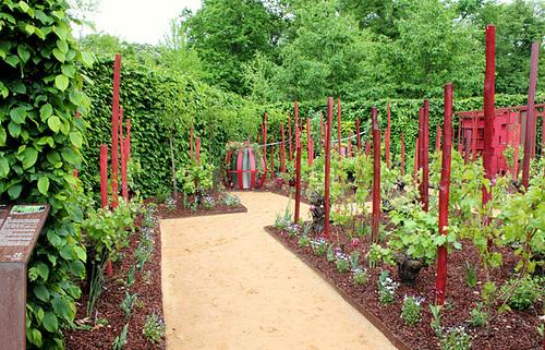 Les parfums du vignoble- Jardin 22 (5)