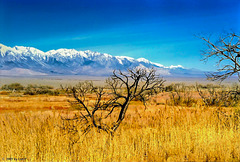 Owens Valley and High Sierra near Manzanar, Febr. 1990 (300°)