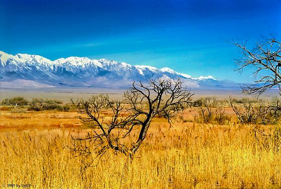 Owens Valley and High Sierra near Manzanar, Febr. 1990 (300°)
