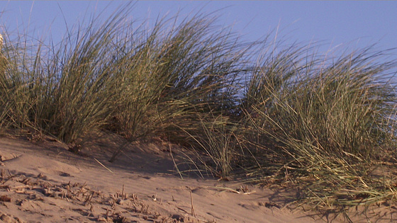 Some grass on the dunes