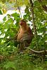 In the wild...no crop....au jungle.