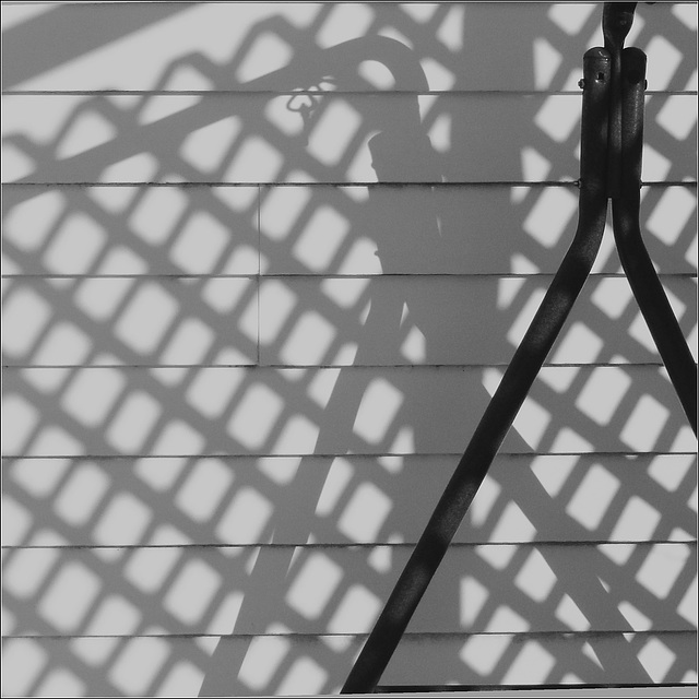 The Shadow Trellis