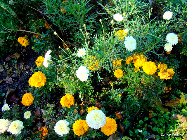 In the English Garden