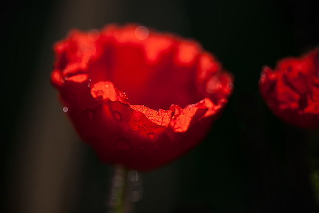 """313/365: """"We owe our World War veterans - and all our veterans - a debt we can never fully repay."""" ~ Doc Hastings"""