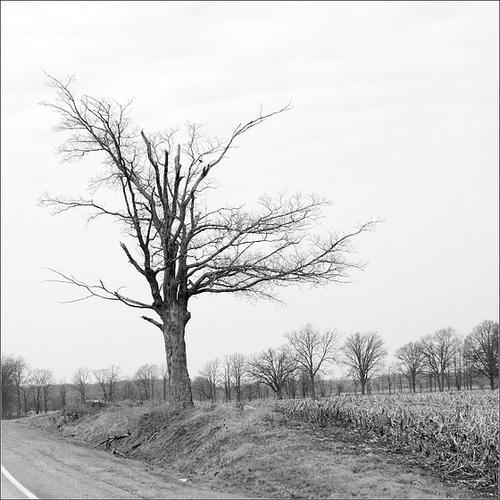 Tree & Trees