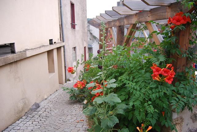 Petite ruelle fleurie de St nectaire