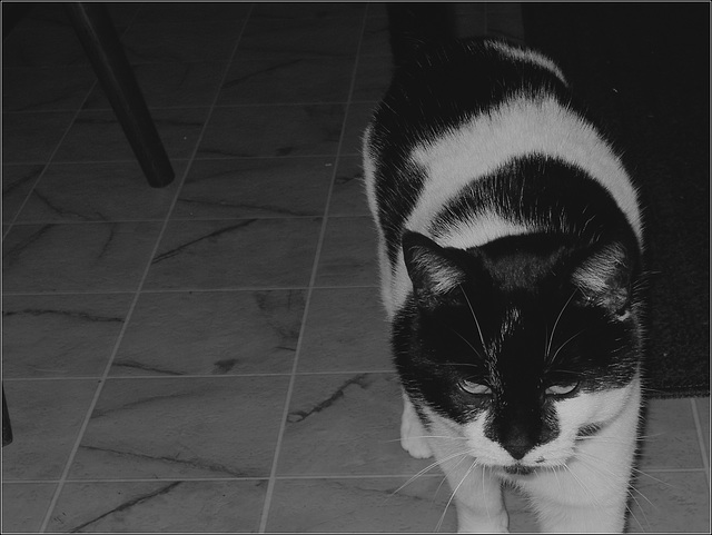 Oreo, Stalking Breakfast