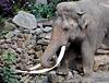 Emmen Zoo – Elephant