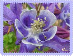 Image fleur