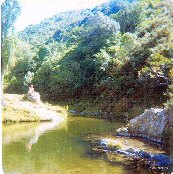 At the poplars swimming hole