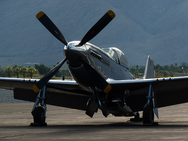 Portrait of a Mustang (4) - 30 November 2013