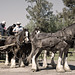 The Horse Team