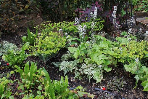 Composition avec des Athyrium niponicum , des Heucherella , Des Scolopendre , Des Euphorbia amygdaloïdes