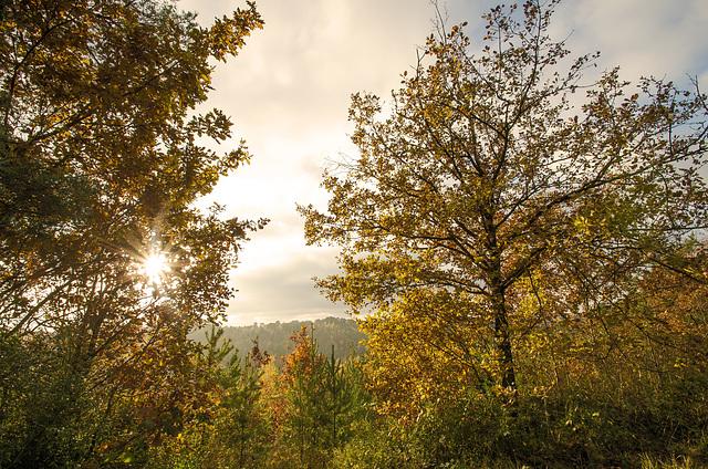 Forêt des trois pignons