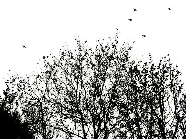 Birds growth on trees