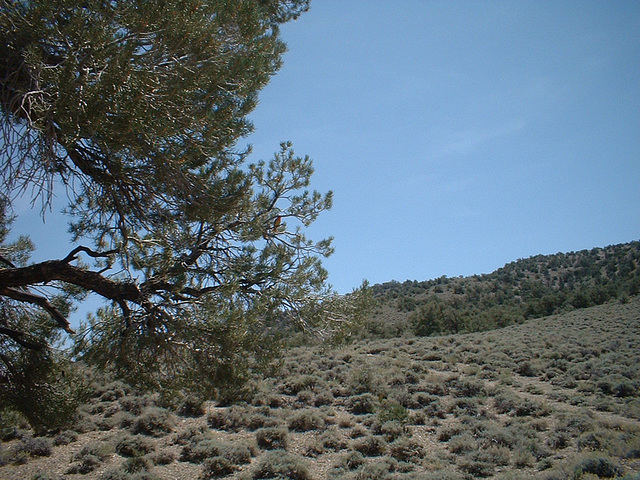 Inyo Mtns 05