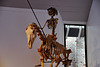 Museum Boerhaave – Skeleton of horse and rider