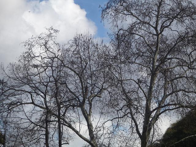 Cielo y árboles de Buenos Aires