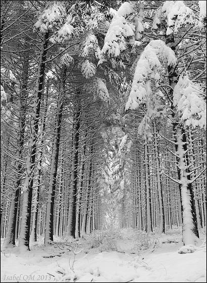 Forêt de Breuil