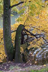 L'automne au Parc de La Tête d'Or (Lyon, Rhône)