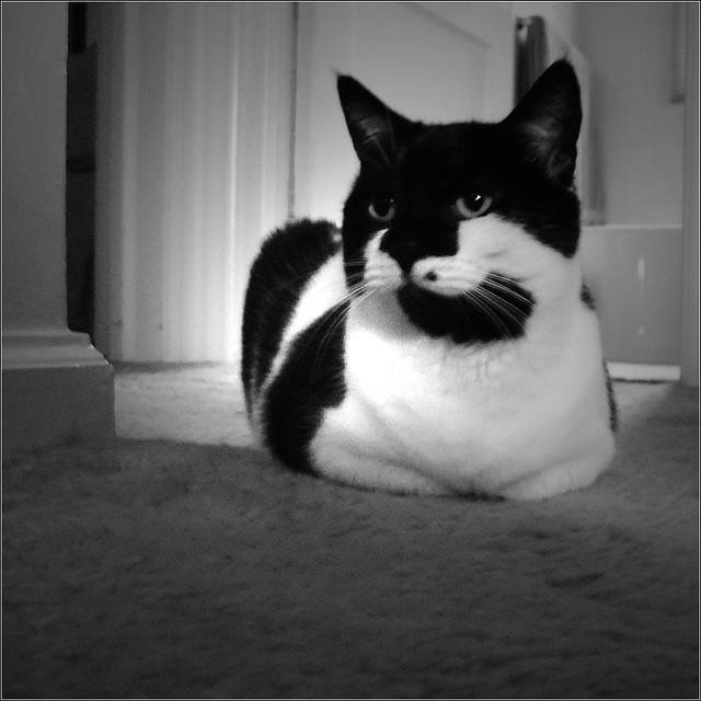 Oreo Sits for a Portrait