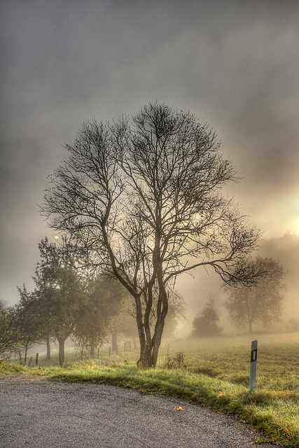 Herbstmorgen - The Mood of Fall (135°)