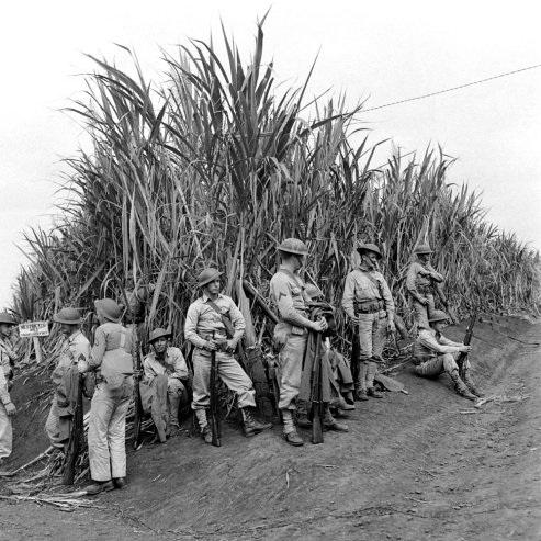 Regulars in a cane field