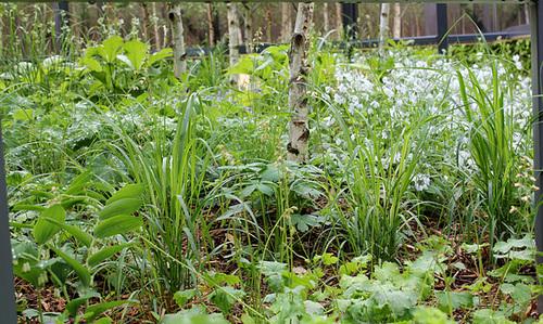 Outside -in - Jardin 11 - Sous-bois avec Betula utilis