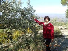 Mia edzino sxteletas olivojn