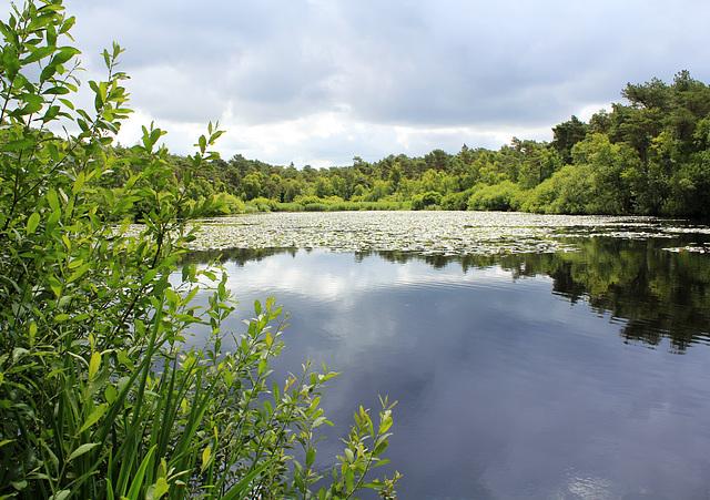 See im Finkenmoor