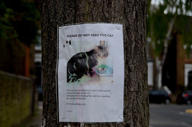 Please do not feed this cat