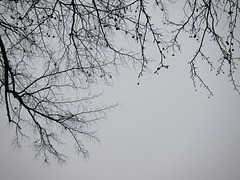 Branches ...