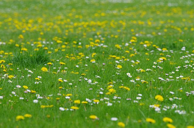 Springtime Green