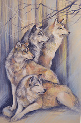 wolves, watching