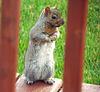 Un petit visiteur…..