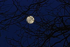 Full Moonrise Behind Branches