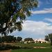 Sunnylands - Annenberg Estate (3537)