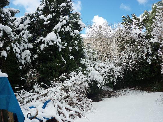 The snow made an ordinary garden look pretty
