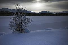 Frozen, Loch Morlich, Glenmore, Scottish Highlands